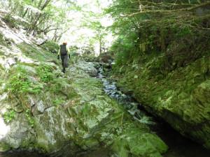 小川のような流れとなる