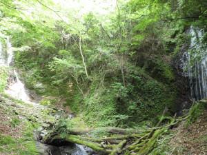 左右を分けるF2(25m)両門の滝 左俣に入る