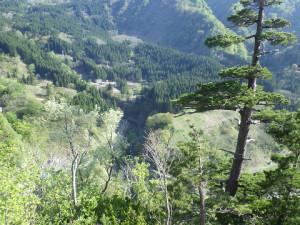 下降路の目印である松の木にたどり着き安堵する